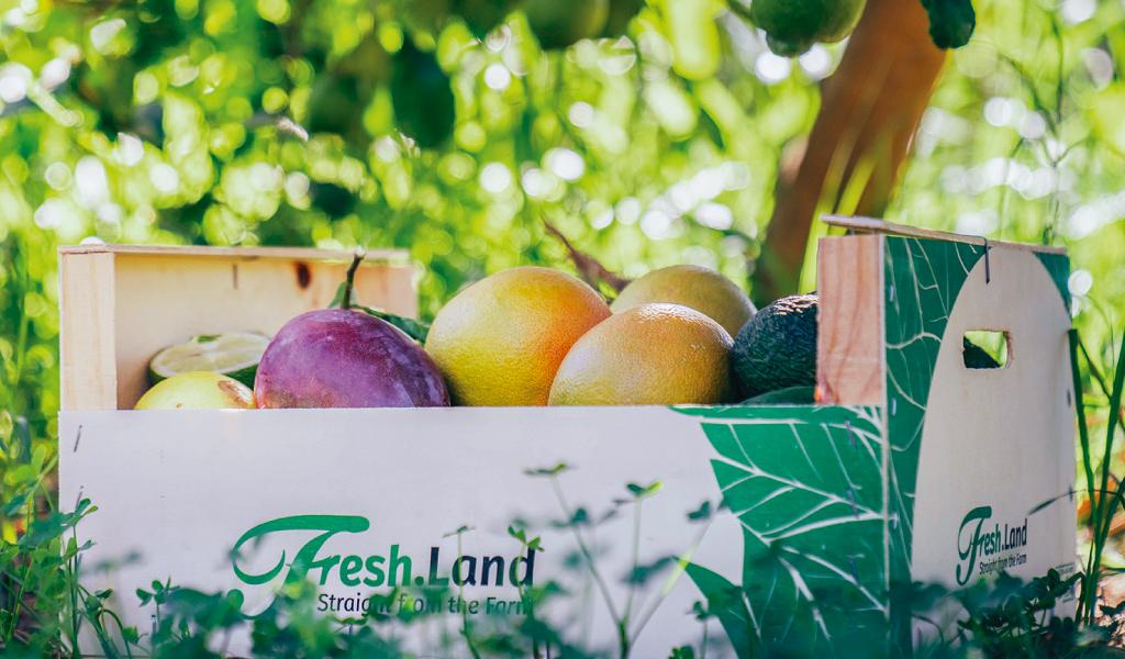 fresh-land